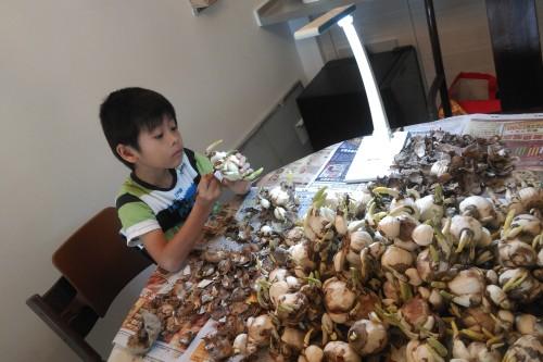 Stedman preparing cny bulbs